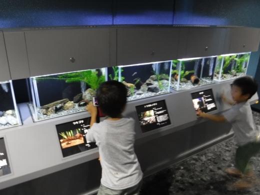 さいたま水族館 (28)