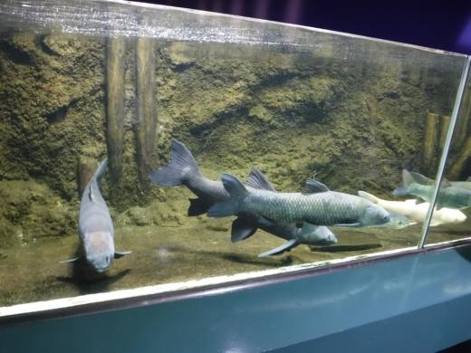 さいたま水族館 (31)