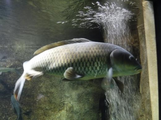 さいたま水族館 (32)
