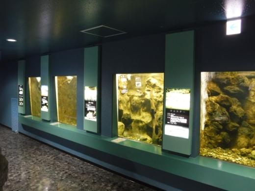 さいたま水族館 (35)