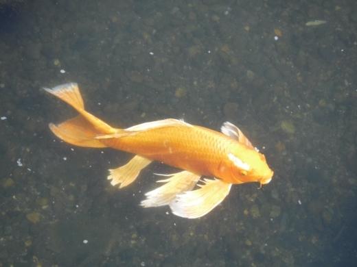 さいたま水族館 (44)