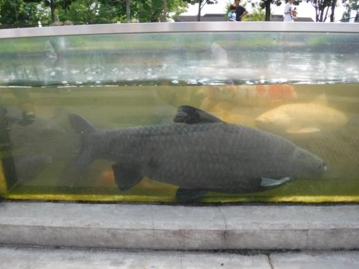 さいたま水族館 (46)