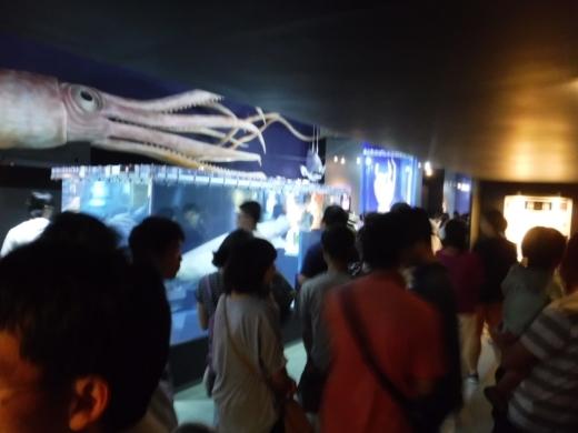 深海展 (29)