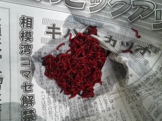 水生昆虫の餌 (2)