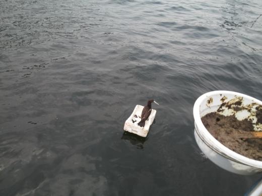 ③初船釣り (19)