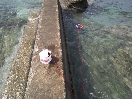 冨浦漁港で釣り (41)