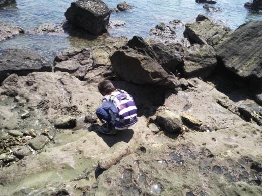 冨浦漁港で釣り (49)