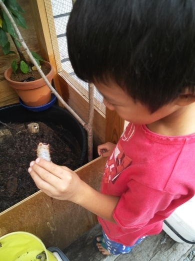 カブトムシ幼虫 (5)