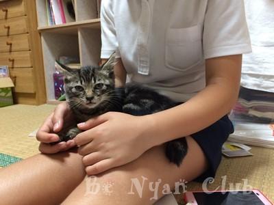 子猫里親募集 石川 富山 福井