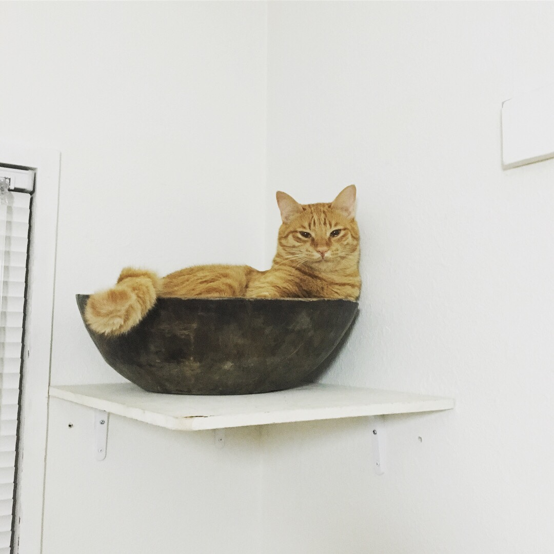 ネコin率100%こね鉢を空中に