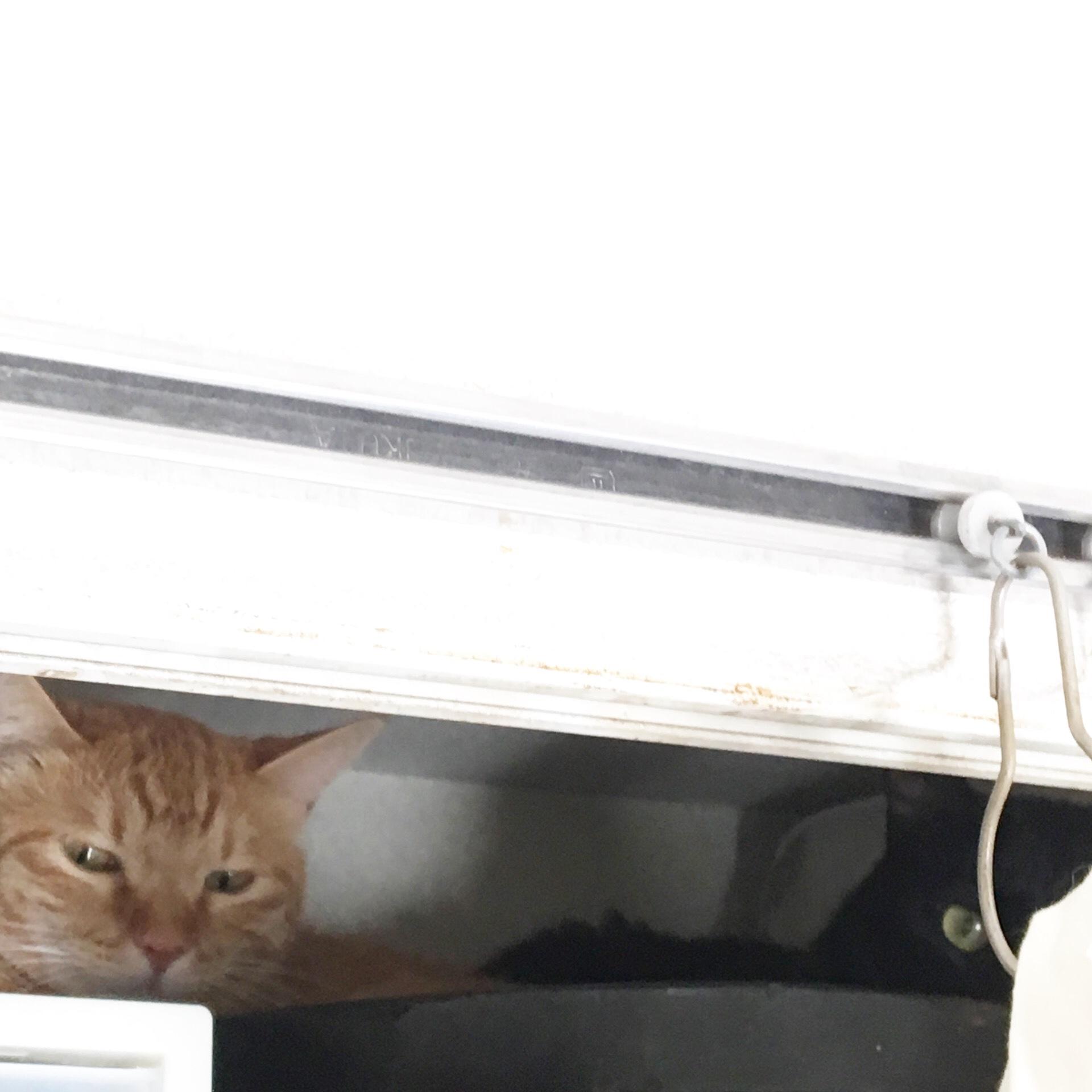 鳴き叫ぶ子猫を保護したらこうなった