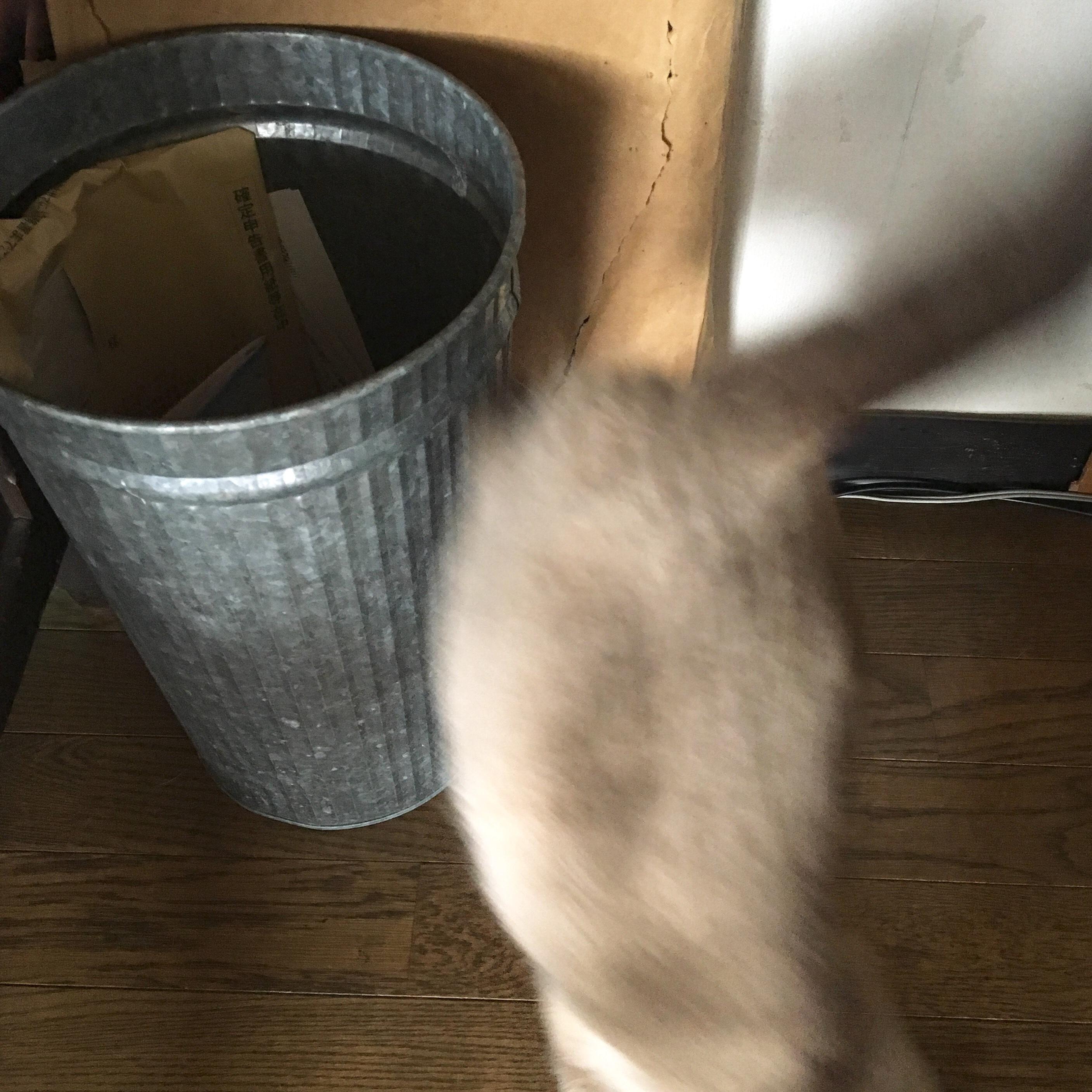 捨て猫出身