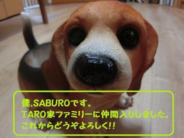 TARO家ファミリーに仲間入りした「 SABURO 」をどうぞよろしく!