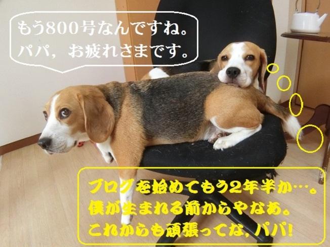 【 ちっちゃな記念日】 おかげさまでTARO&JIROブログも800号!