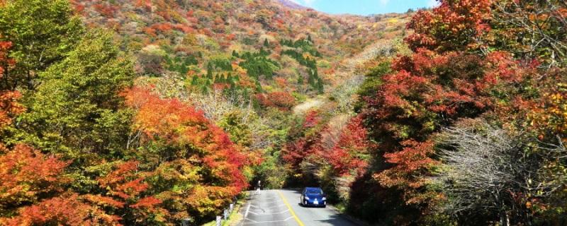 九重山の紅葉