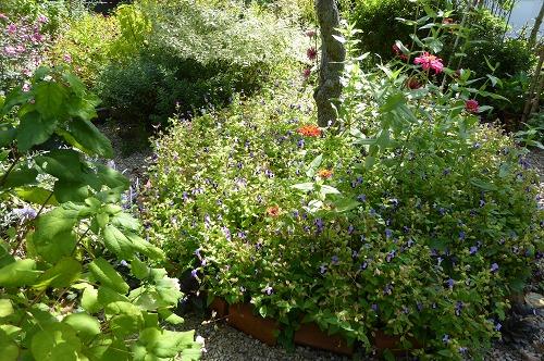 花壇の整理