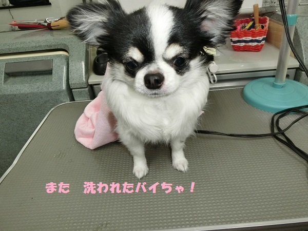 CIMG2263お腹1