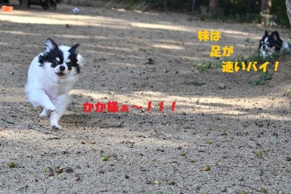 CSC_0318小夏