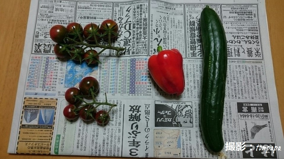 DSC_4529a.jpg