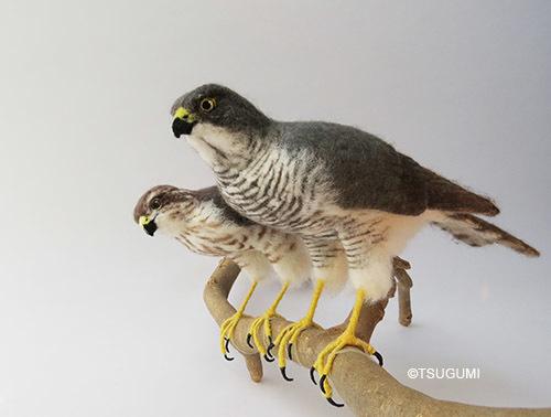170925sparrowhawk.jpg