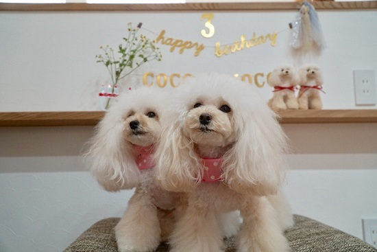 2017年9月23日 ココモコ3歳のお誕生日 & おひさしぶりの挨拶