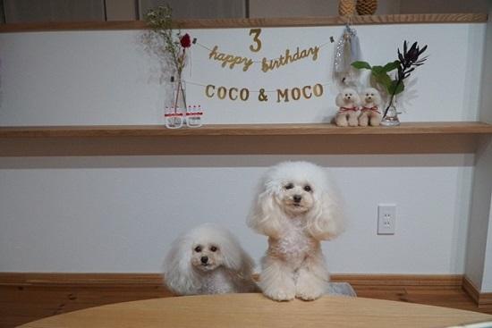 2017年9月23日 ココモコ3歳のお誕生日 & おひさしぶりの挨拶2