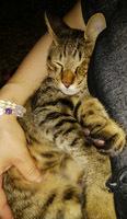 914 UNESCOナイト猫2