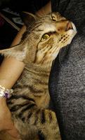 914 UNESCOナイト猫3