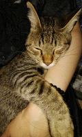 914 UNESCOナイト猫4