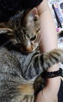 914 UNESCOナイト猫6