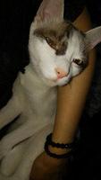 914 UNESCOナイト猫7