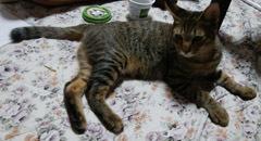 914 UNESCOナイト猫9