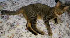 914 UNESCOナイト猫10