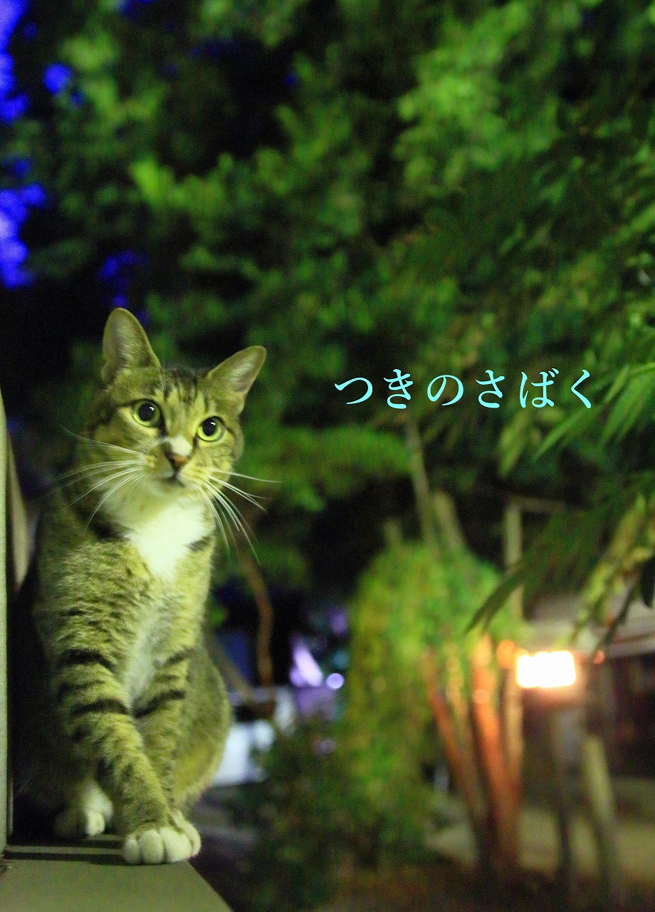 IMG_0244noizu_1.jpg