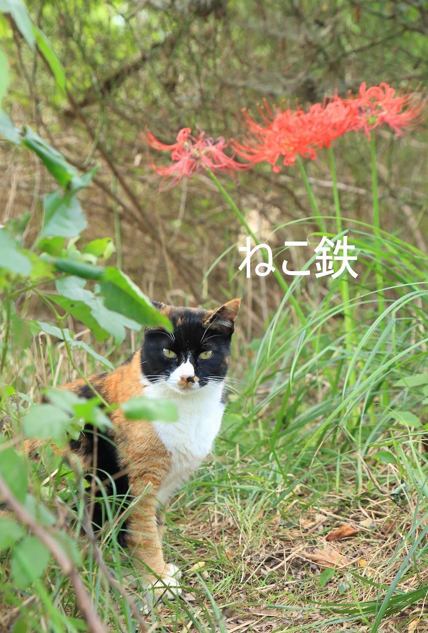 IMG_4464f4900_1.jpg