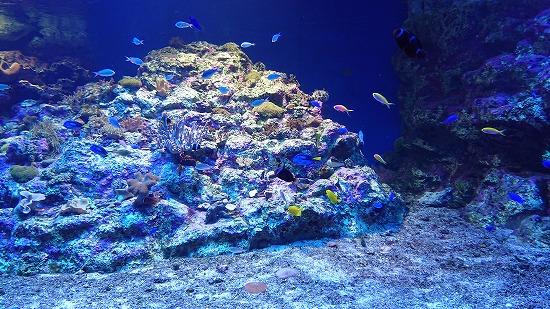 えのすいサンゴ礁