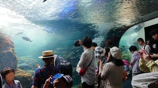 えのすい水のトンネル