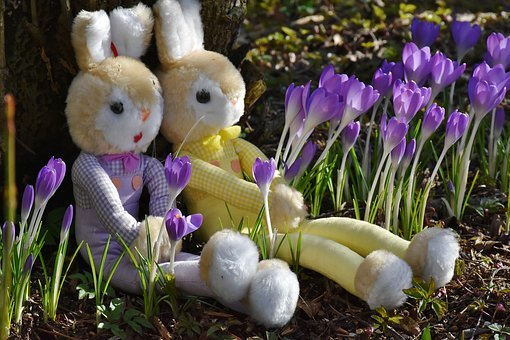 rabbit-2137741__340 (1)