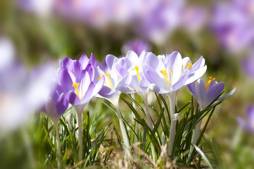 spring-664391__340.jpg
