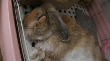 ウルーロップ寝顔