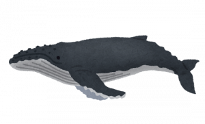 whale_06_zatoukujira.png