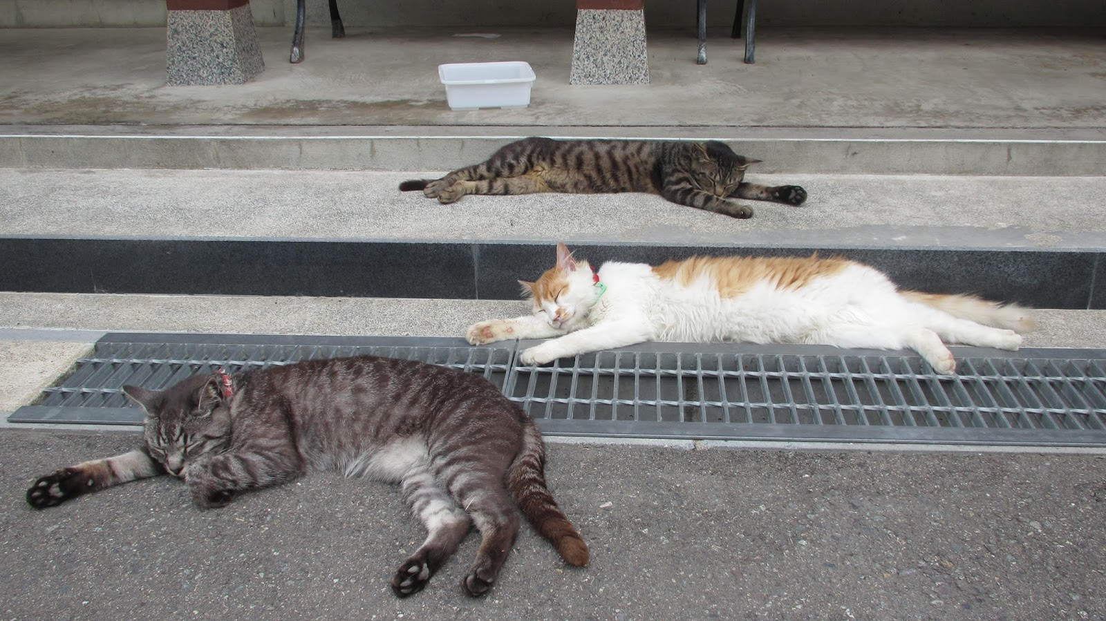 【画像】夏に猫がビヨーンと伸びる理由