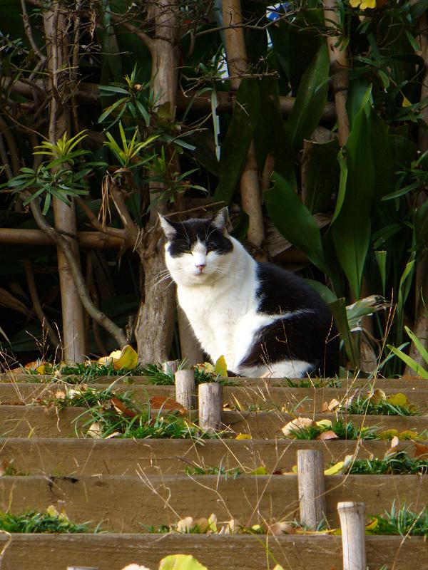 土段スロープの黒白猫2