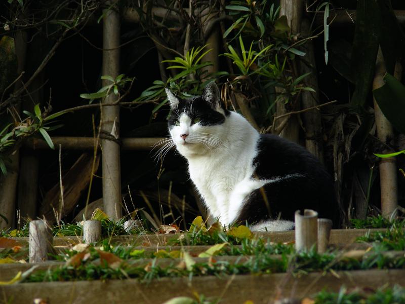 土段スロープの黒白猫3