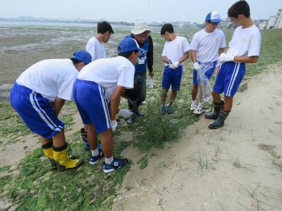 16 干潟の植物調査6班