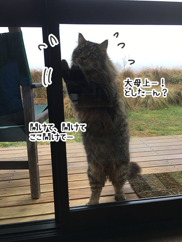 01082017_cat1.jpg