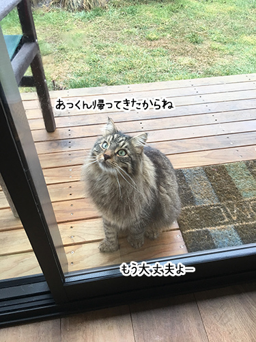 01082017_cat2.jpg