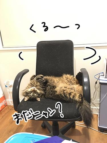 01092017_cat1.jpg