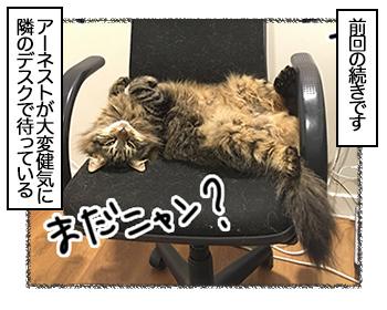 05092017_cat1.jpg