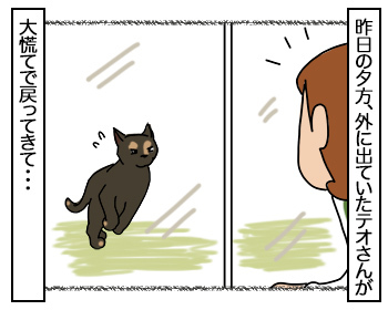 08082017_cat1.jpg